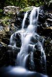 Drömlik vattenfall i skogen Royaltyfri Bild