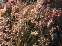 Drömlika blommor i soluppgången Fotografering för Bildbyråer