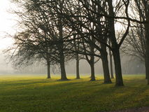 drömlika trees arkivfoton