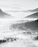 Drömlikt dimmigt skoglandskap Majestätiska maxima av den djupa dalen för gammal mist för trädsnittbelysning är fulla av färgrik d Arkivfoto