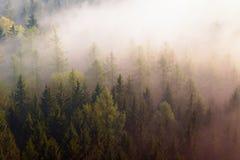 Drömlikt dimmigt skoglandskap Majestätiska maxima av den djupa dalen för gammal mist för trädsnittbelysning är fulla av färgrik d Fotografering för Bildbyråer
