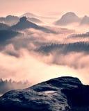 Drömlikt dimmigt skoglandskap Majestätiska maxima av den djupa dalen för gammal mist för trädsnittbelysning är fulla av färgrik d Arkivbild