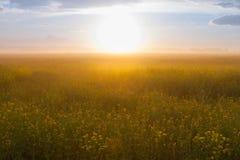 Drömlikt fält med solen och dimma Fotografering för Bildbyråer