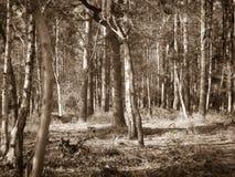 drömm skogen royaltyfria foton
