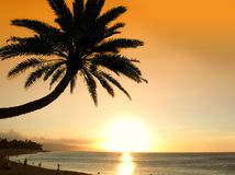 drömm tropiskt Arkivfoton