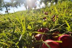 Drömma för fruktträdgård arkivbild