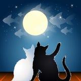 Drömma katter på ett tak Arkivfoton