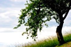 drömma min tree Fotografering för Bildbyråer