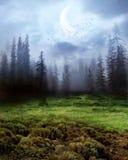 drömmarnas land Arkivfoto