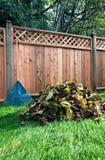 Dręczący liście wypiętrzający obok ogrodzenia Fotografia Royalty Free