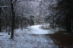 Drżeć przez drewien śnieg fotografia royalty free