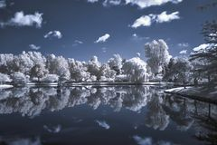 Infrared Landscape of trees and pond stock photos