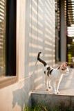 Drôle heureux de chat mignon avec l'animal familier d'amour, chat naturel Images libres de droits