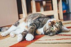 Drôle retournez le chat Photographie stock