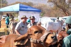 Dr. Peter Milton op recht, die vee beoordelen bij kampioenschap Royalty-vrije Stock Foto's