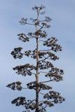 Dr Seuss träd Arkivfoton