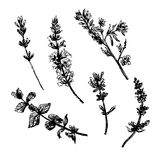 Dra den fastställda samlingen av lösa blommor skissa handen drog illustrationen vektor illustrationer