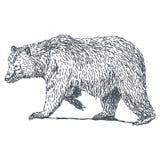 Dra för björn royaltyfri illustrationer