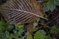 Dra frost på djupfrysta gräsplaner Arkivbilder