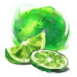 Dra limefrukt med en skiva Royaltyfri Foto