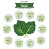 Dra nytta hälsa av grönkål, grafisk mat för information, grönsakvektor Royaltyfria Bilder