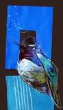 Dra på papper av den blåa paradisfågeln Arkivfoton