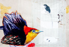 Dra på papper av paradisfågeln Royaltyfria Foton