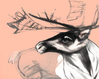 """Dra på papper nära övre av för hjort†"""" Fotografering för Bildbyråer"""