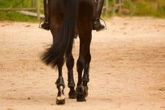 Dra tillbaka av häst och ryttaredetaljen Royaltyfri Bild