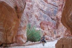 Dra tillbaka till Petra arkivbilder