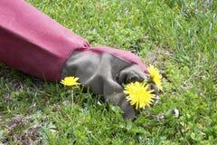 dra weeds Royaltyfria Bilder