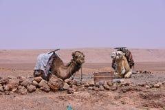 draa M nära ouarzazatedalen arkivfoto