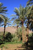 Draa Valley Royalty Free Stock Photography