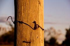 Draad rond een post in de avond wordt verpakt zon die stock foto's