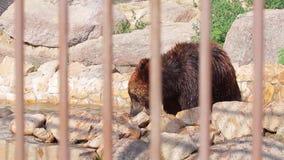 Draag in de dierentuin stock footage