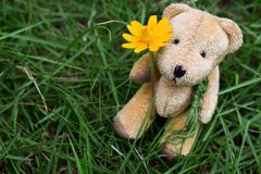 Draag Doll Zitting in Gras Stock Fotografie