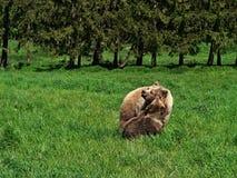 Draag en teddybeer. Stock Foto's