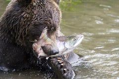 Draag en vis Stock Fotografie