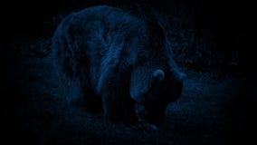 Draag etend bij Nacht stock footage