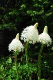 Draag grasbloemen in waterton Royalty-vrije Stock Foto