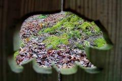Draag profiel met mos stock fotografie