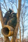 Draag welpenspel in een boom, beklom hoogte op de takken en een leuke beet elkaar stock afbeeldingen