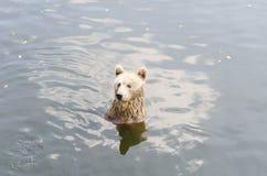 Draag zit op een rivier Stock Foto's