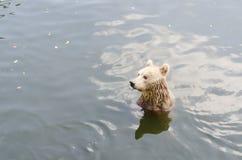 Draag zit op een rivier Royalty-vrije Stock Fotografie