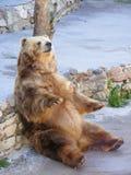 Draag zittend op steen Stock Fotografie