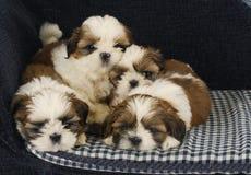 Draagstoel van puppy royalty-vrije stock afbeeldingen