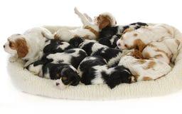 Draagstoel van puppy stock afbeeldingen