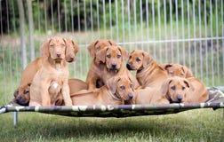 Draagstoel van puppy stock afbeelding