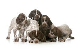 Draagstoel van puppy royalty-vrije stock afbeelding