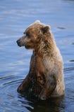Draagt het Nationale Bruine Park van de V.S. Alaska Katmai in water royalty-vrije stock foto's